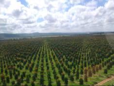 mono cultivation